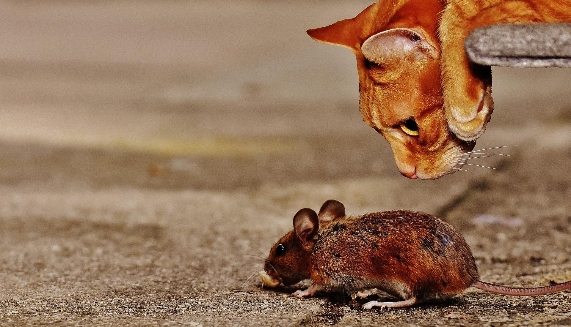 Wiersze Okazjonalne Wiersze Dla Dzieci Kot I Mysz